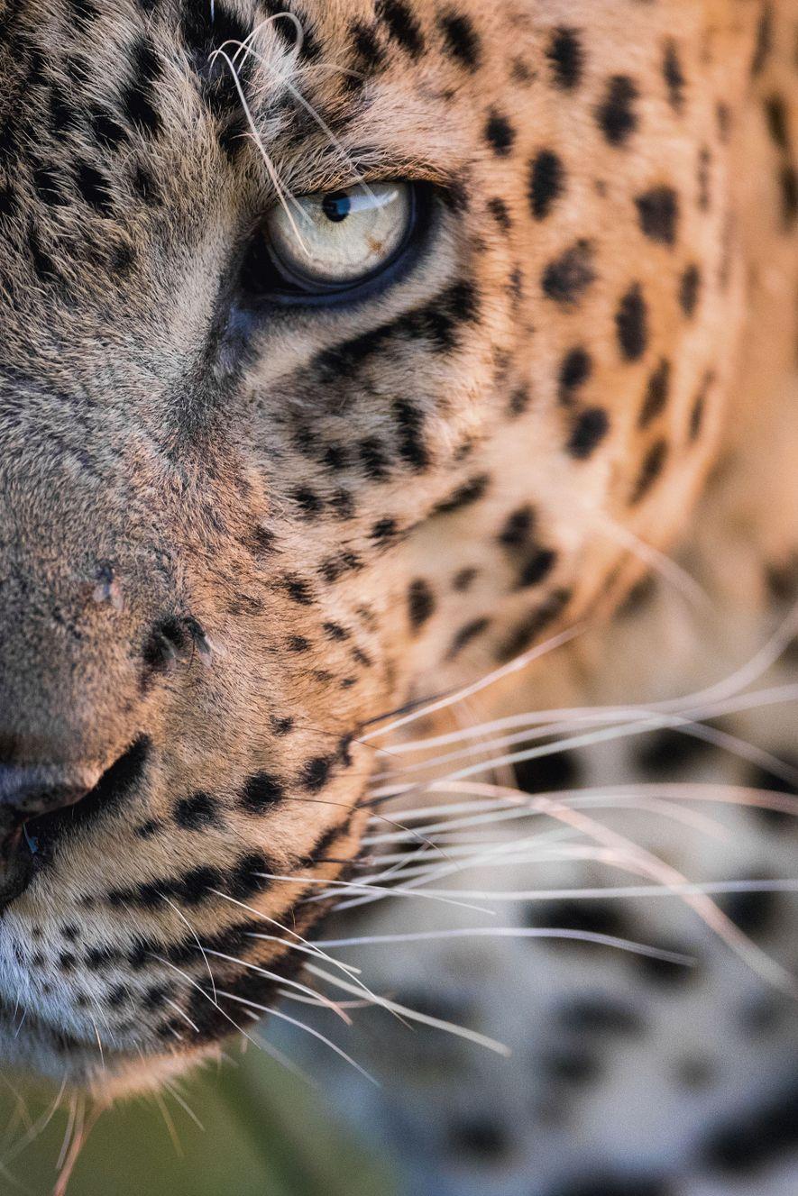 Botswana wildlife