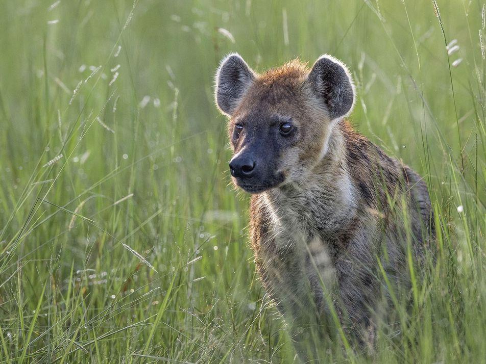 Photo story: Wildlife in Botswana
