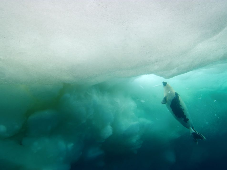 Behind the shot: Visit the vibrant world under the Arctic sea ice