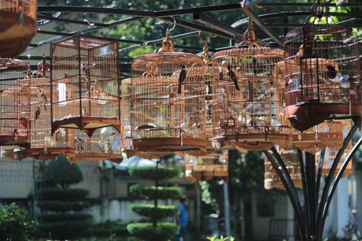 Birds of Tao Dan Park.