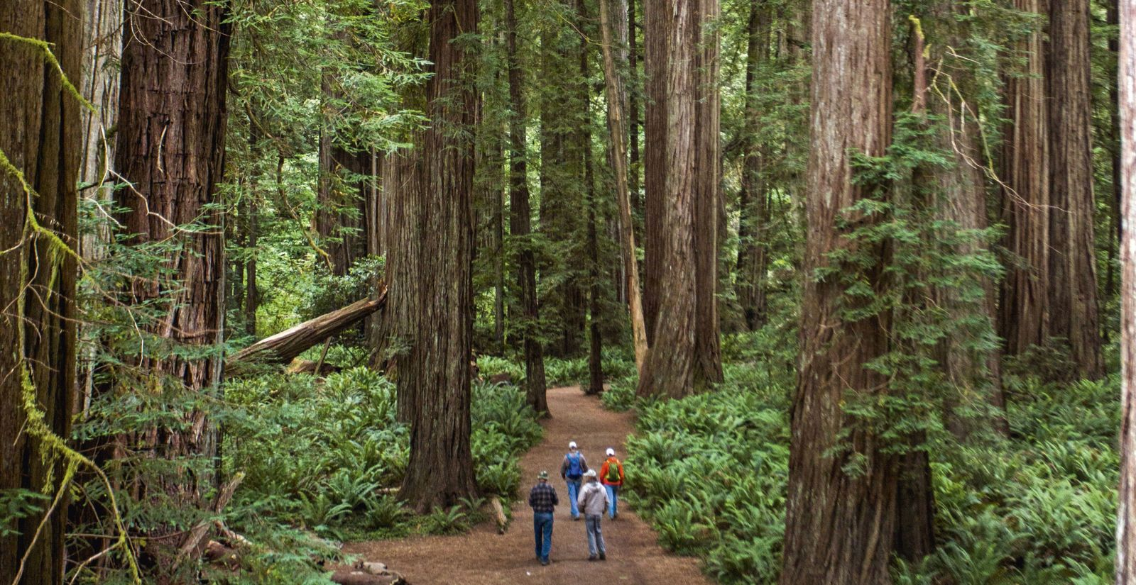 California cool: Beyond the Redwood curtain