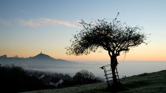The 'Holy Thorn' – actually a more recent addition – on Wearyall Hill. Legend records that ...