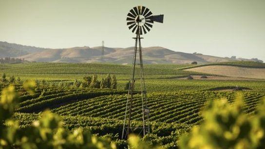 Vineyard, Sonoma County
