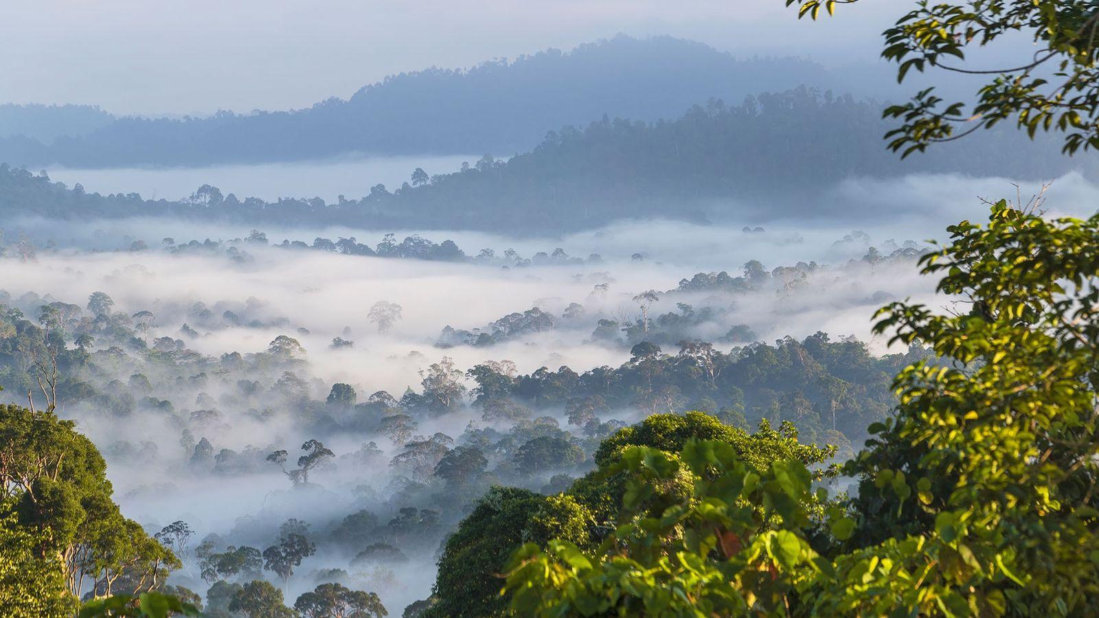 Mist over Borneo rainforest