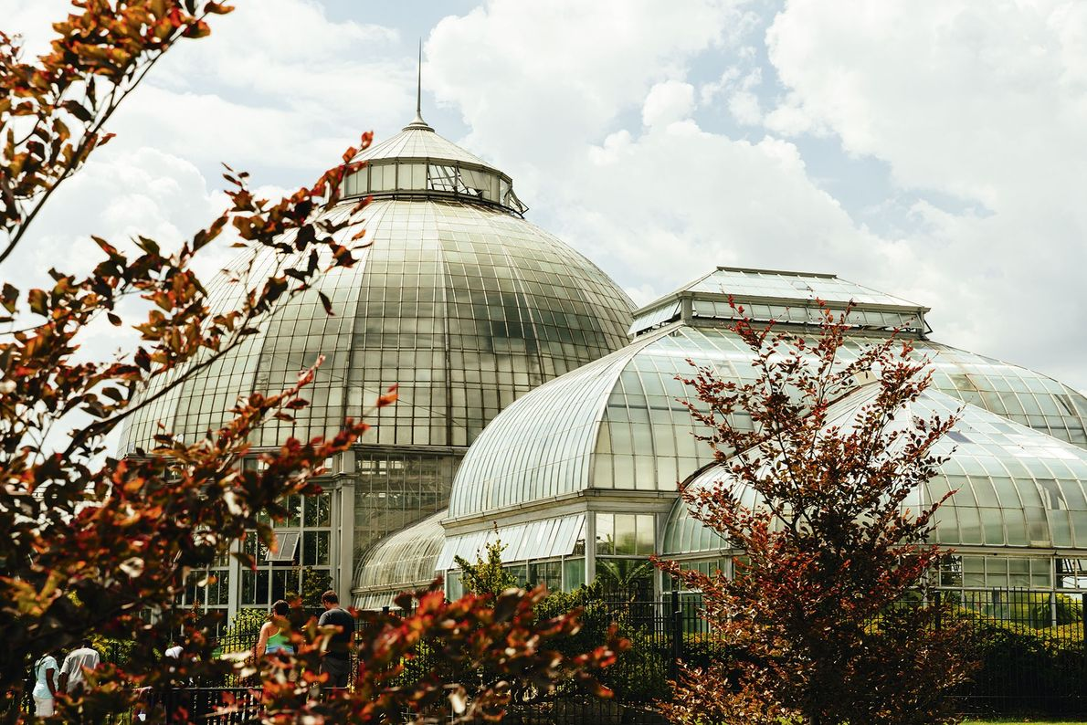 The Anna Scripps Whitcomb Conservatory, Belle Isle