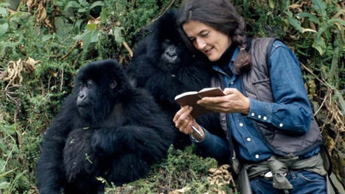 Meet the heroes who are saving our endangered species: Dian Fossey