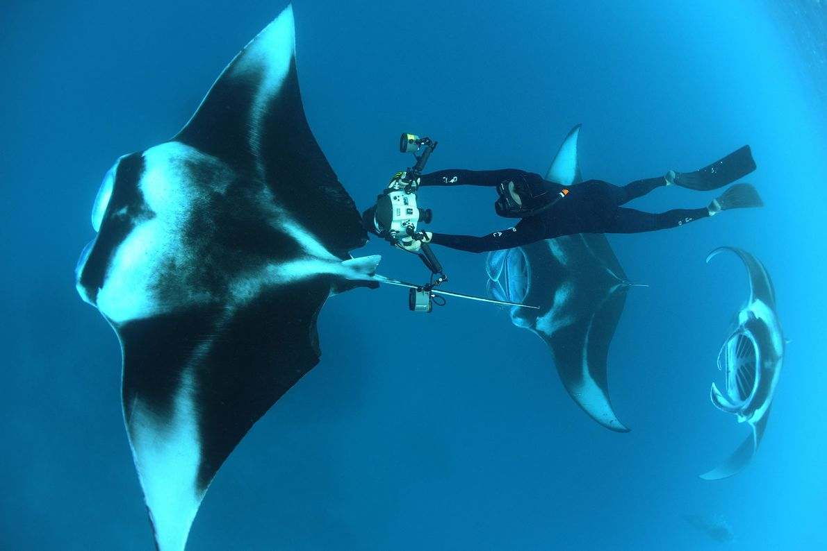 National Geographic Photographer Thomas Peschak free dives and photographs manta rays in the Maldives.
