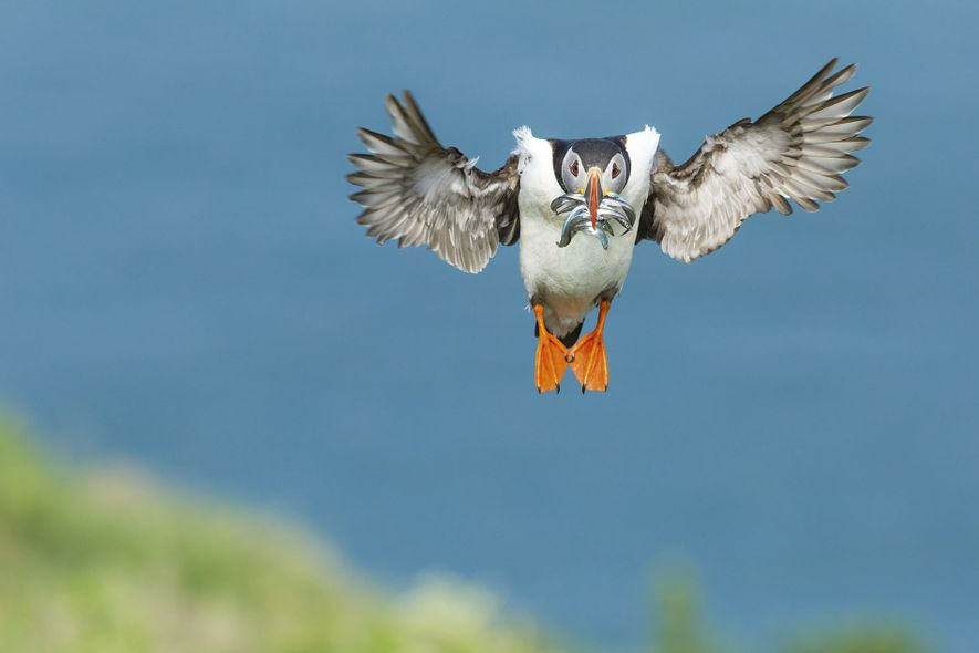 Nature category winner: Skomer Island, Wales
