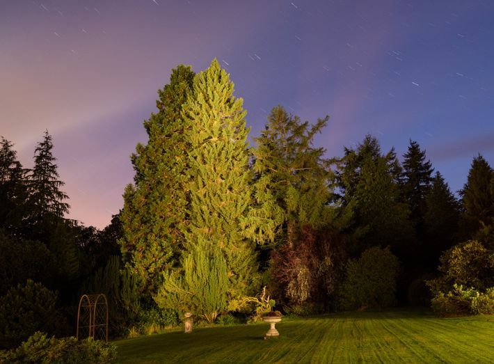 David McCabe's spruce at Abercairny, Crieff, Scotland is on the shortlist for 2017 Tree of the ...