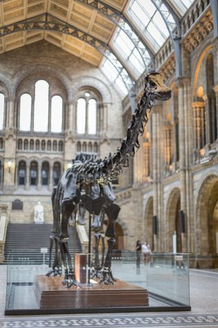 Dippy has now left its century-old home in the Natural History Museum, replaced by Hope, a ...