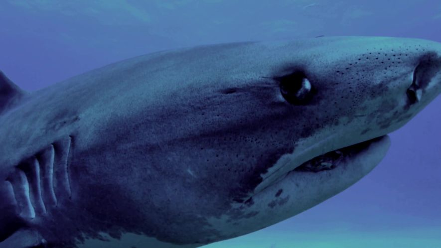 Dive Beneath the Headlines of Terrifying Shark Attacks - When Sharks Attack