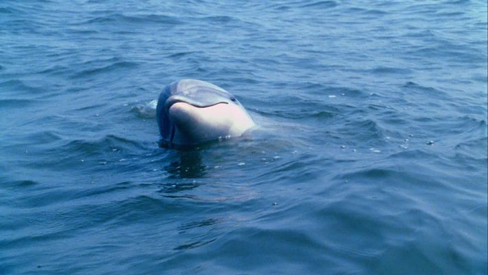 Dolphin Talk Decoded
