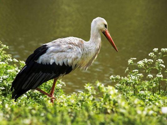 Poland: Stork village