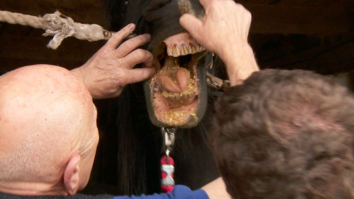 Dr Pol the Horse dentist