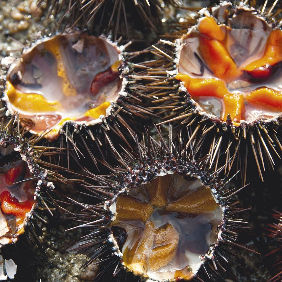 Sea urchins, wild boar and maquis herbs: what to eat on the island of Corsica