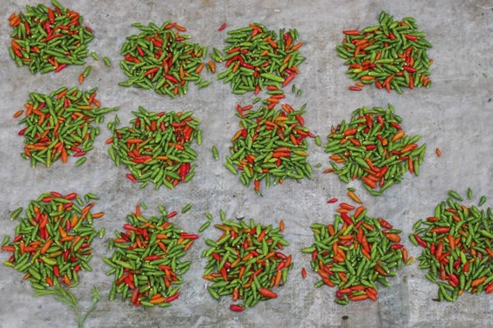 Locally grown chillies. Image: Audrey Gillan