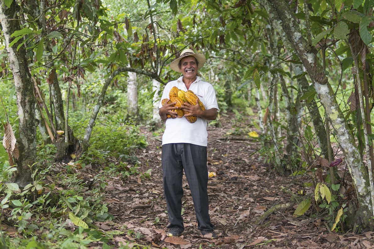 Farmer Divino at Piedra de Plata with armfuls of Ancient National cacao pods.