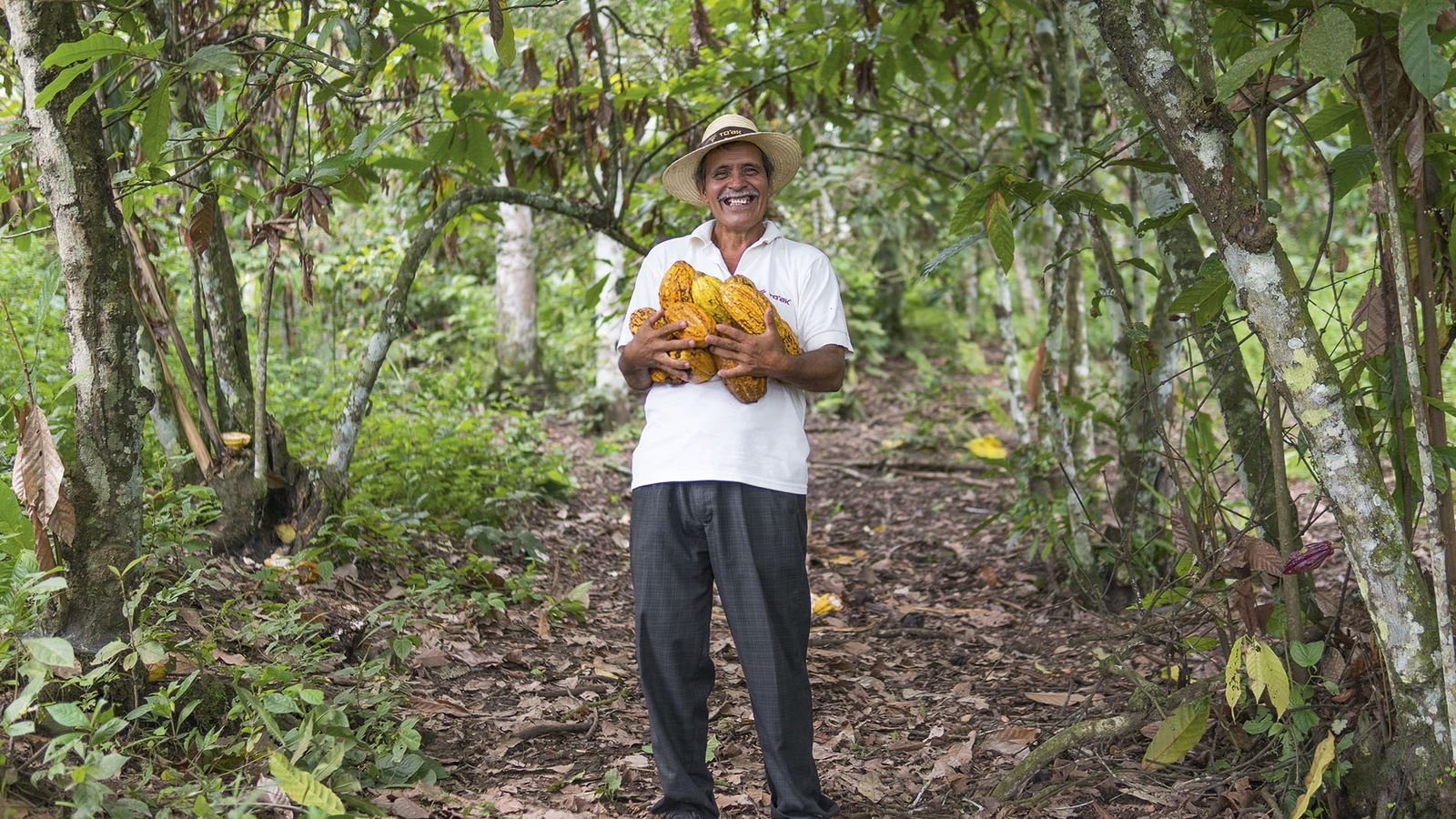Farmer Divino at Piedra de Plata with armfuls of Ancient Nacional cacao pods