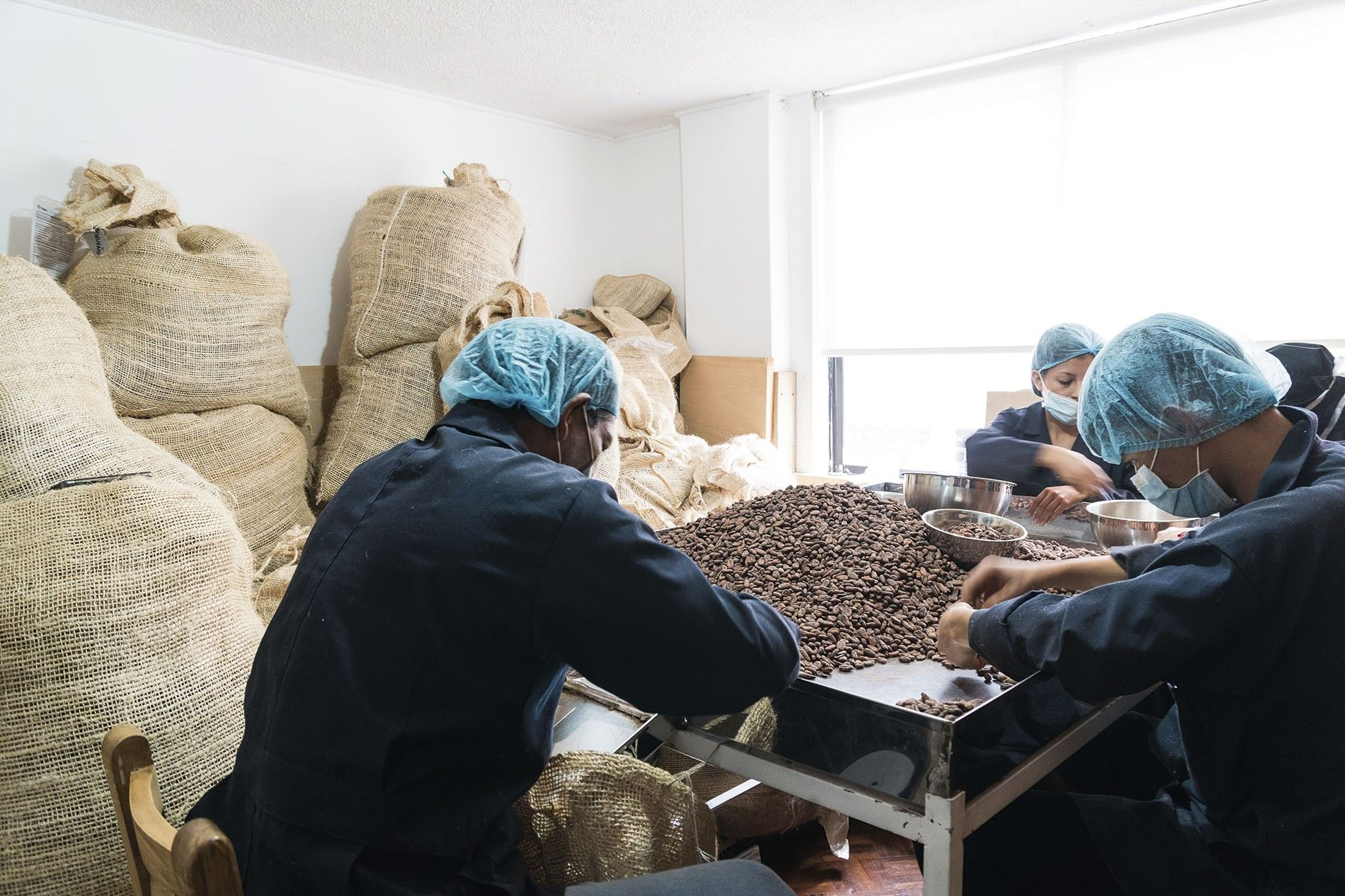 Workers sort cacao beans for size at To'ak.