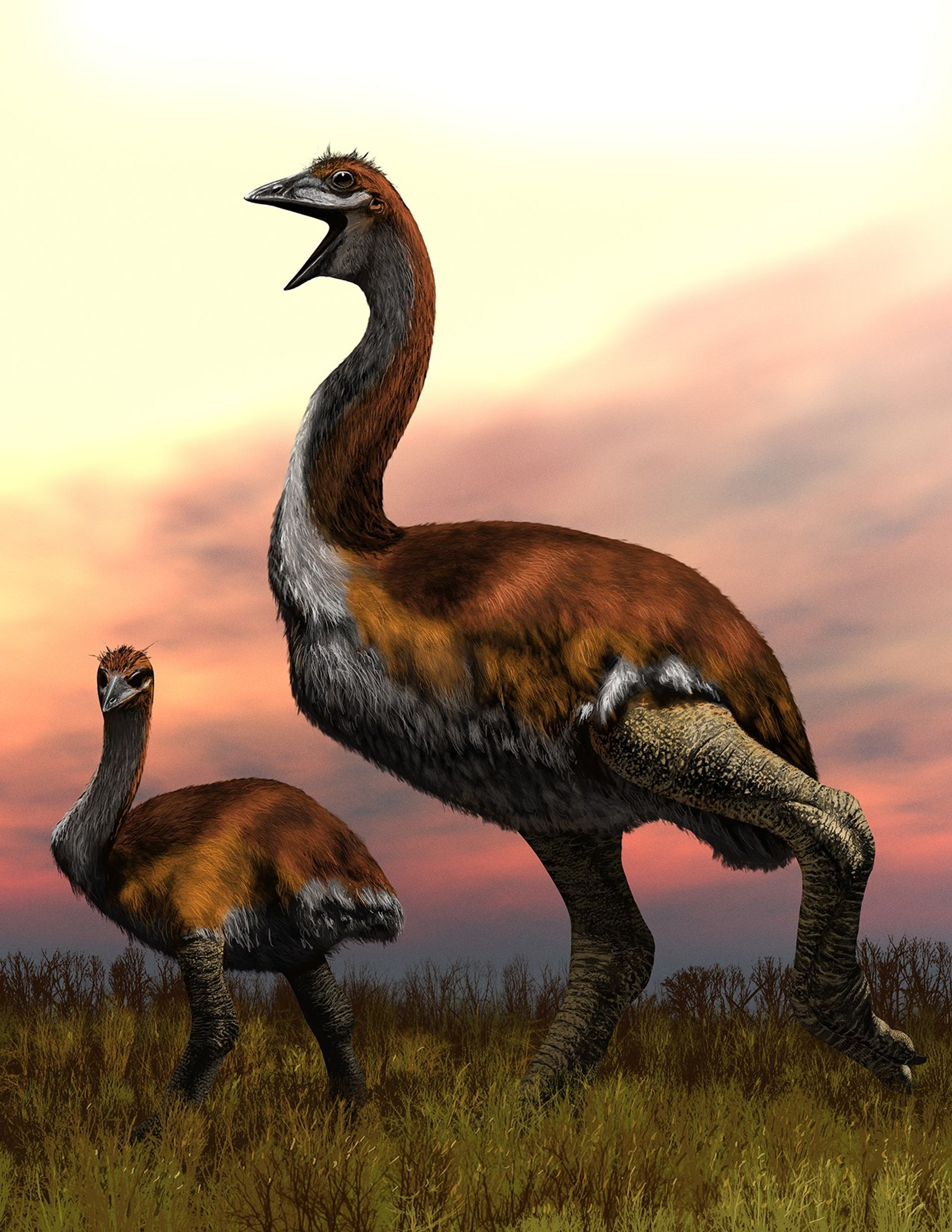 An artist's impression of the colossal elephant bird.