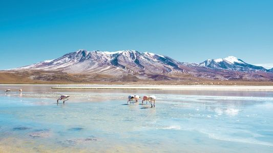 Ask the experts: A short trip to Bolivia