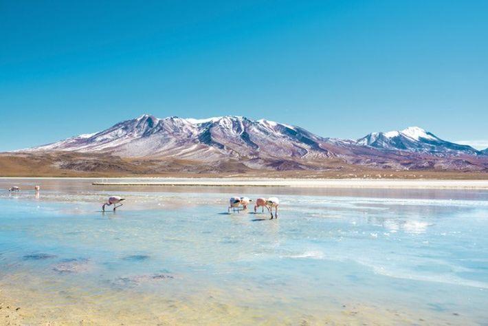 Laguna Hedionda, Bolivia.