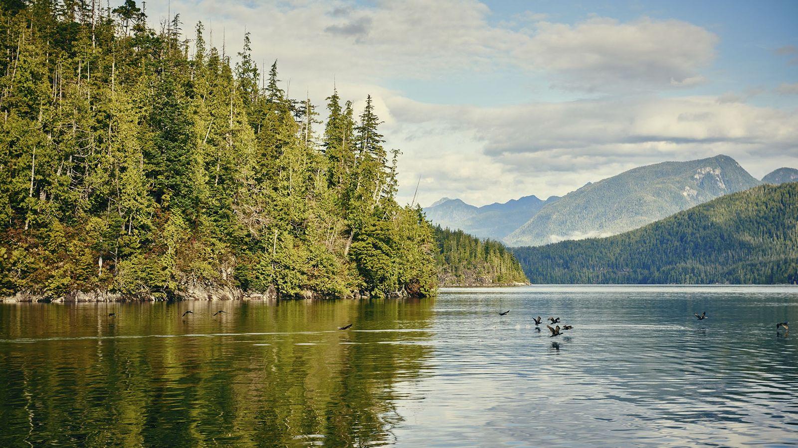 A serene Tofino inlet, Canada.