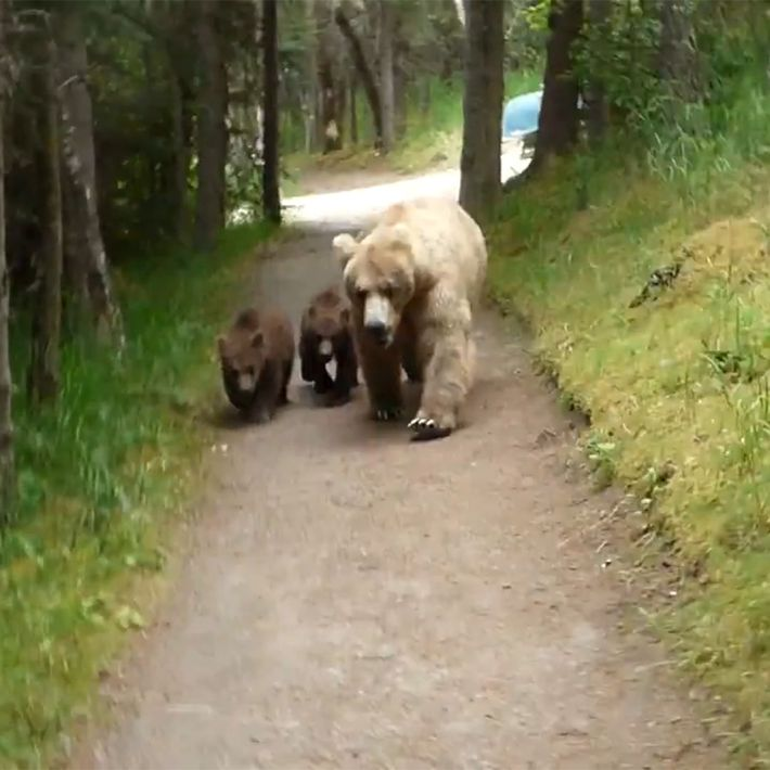 Hiking with bears