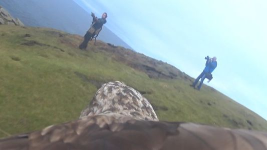 An Eagle's Point of View