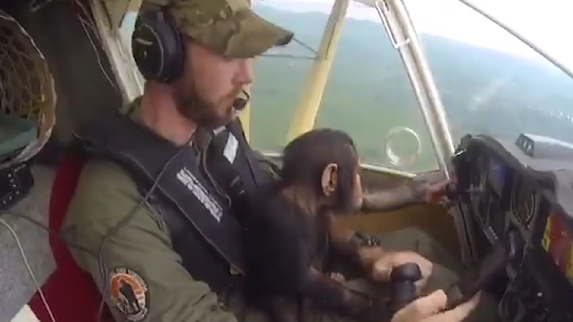 Baby Chimpanzee sits at the controls of an aircraft with the pilot