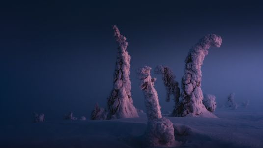 This is what -35 C in Finland's surreal winter forest is like