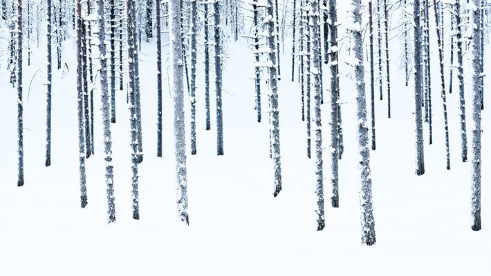 The taiga forest as seen in the Oivangin Lomakartano Oy area, close to Ruka and Kuusamo. ...