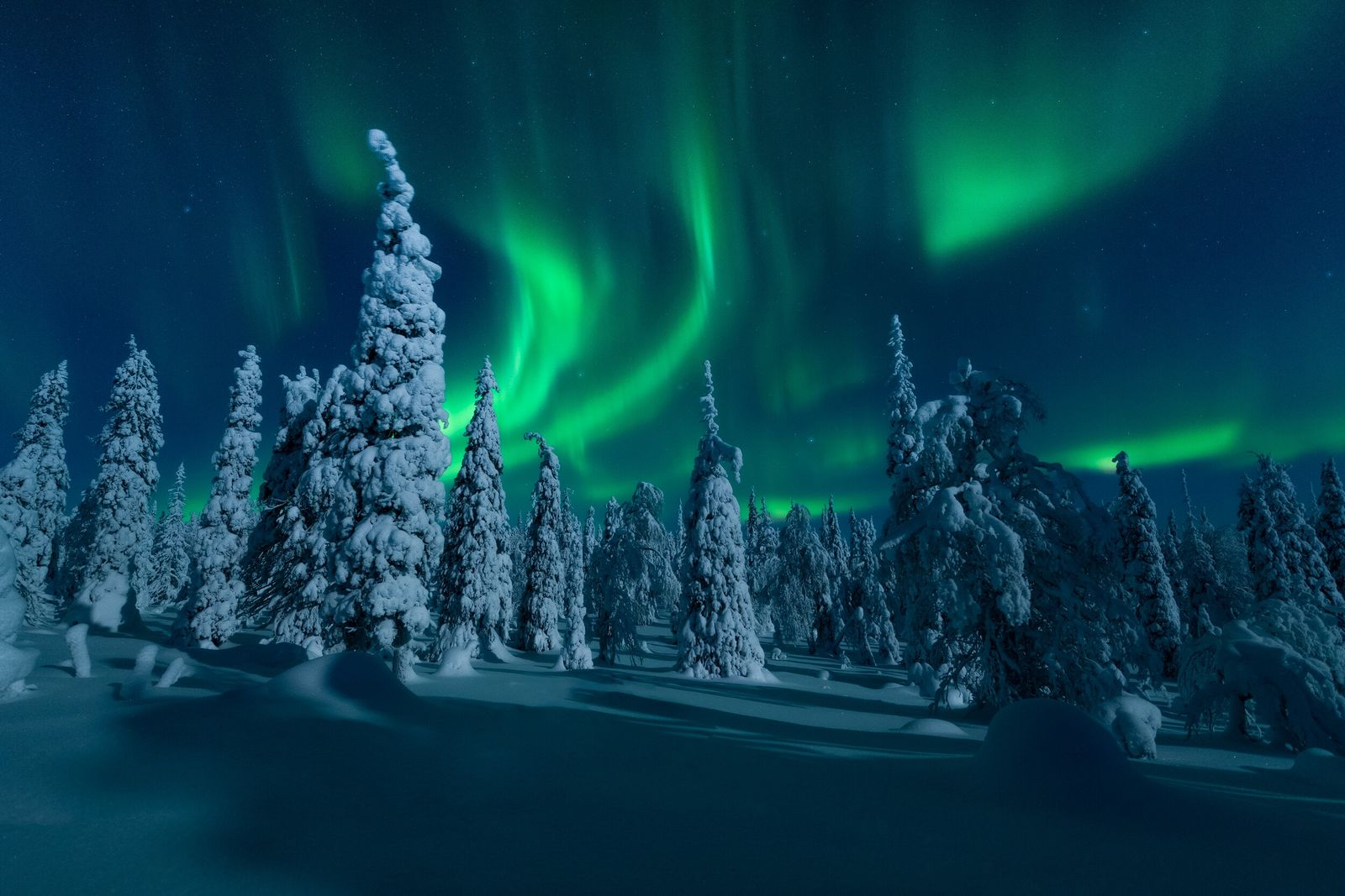 "The aurora borealis unfolds above the boreal forest in northern Finland. Photographer Stian Klo: ""When it happens, and ..."