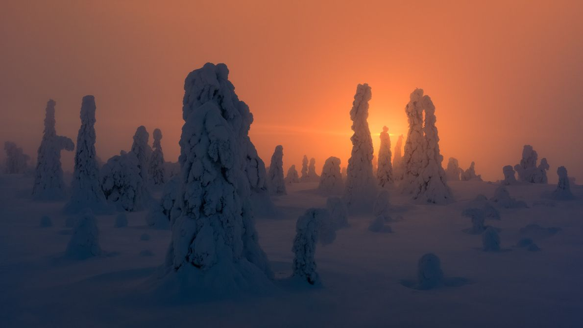 "Spruce trees hung with snow in Finland's Arctic north. Stian Klo: ""The trees were surrounded by thick ..."