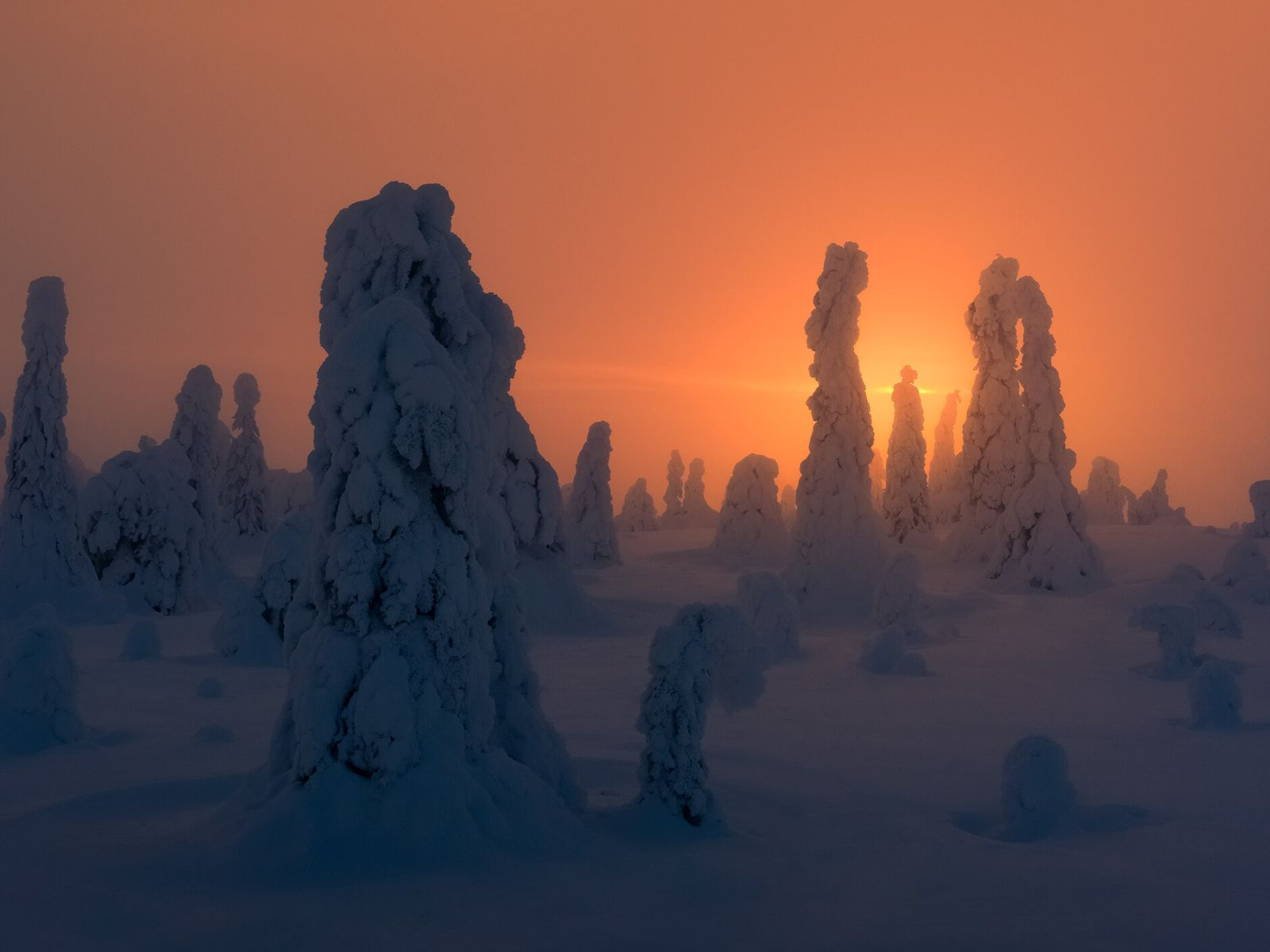 """Spruce trees hung with snow in Finland's Arctic north. Stian Klo: """"The trees were surrounded by thick ..."""