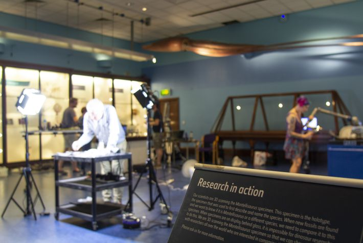 In the public Marine Invertebrates Gallery, under the watchful eye of a giant squid model, the ...