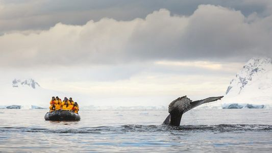 Tourism in Antarctica: what does it mean for the world's last great wilderness?
