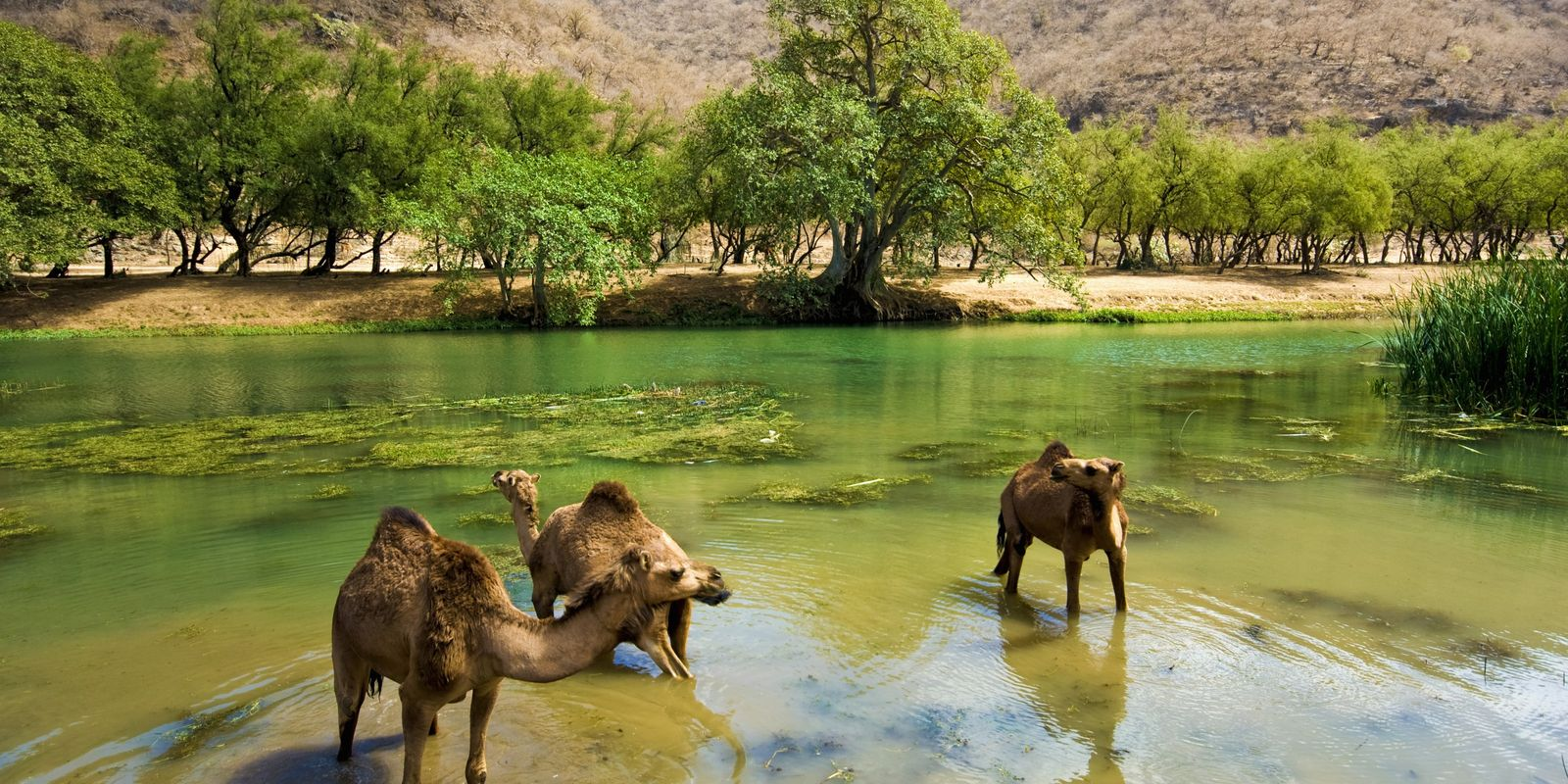 Salalah: Say goodbye to the desert