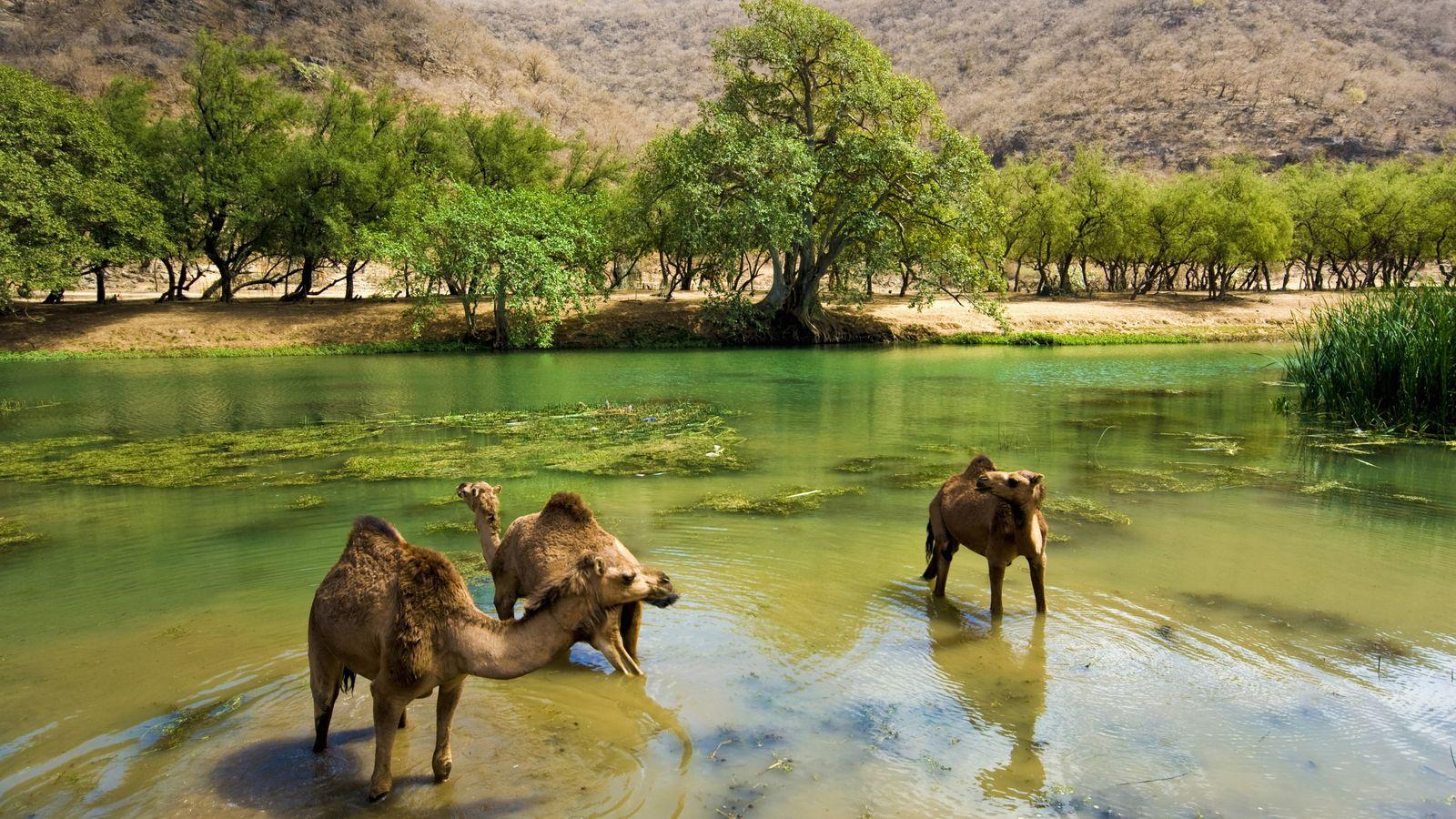 A natural pool in Salalah