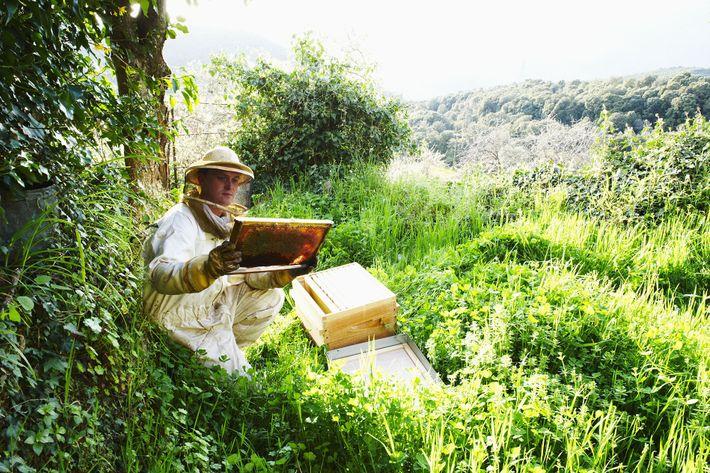A honey producer near Peri village, Ajaccio, Corsica