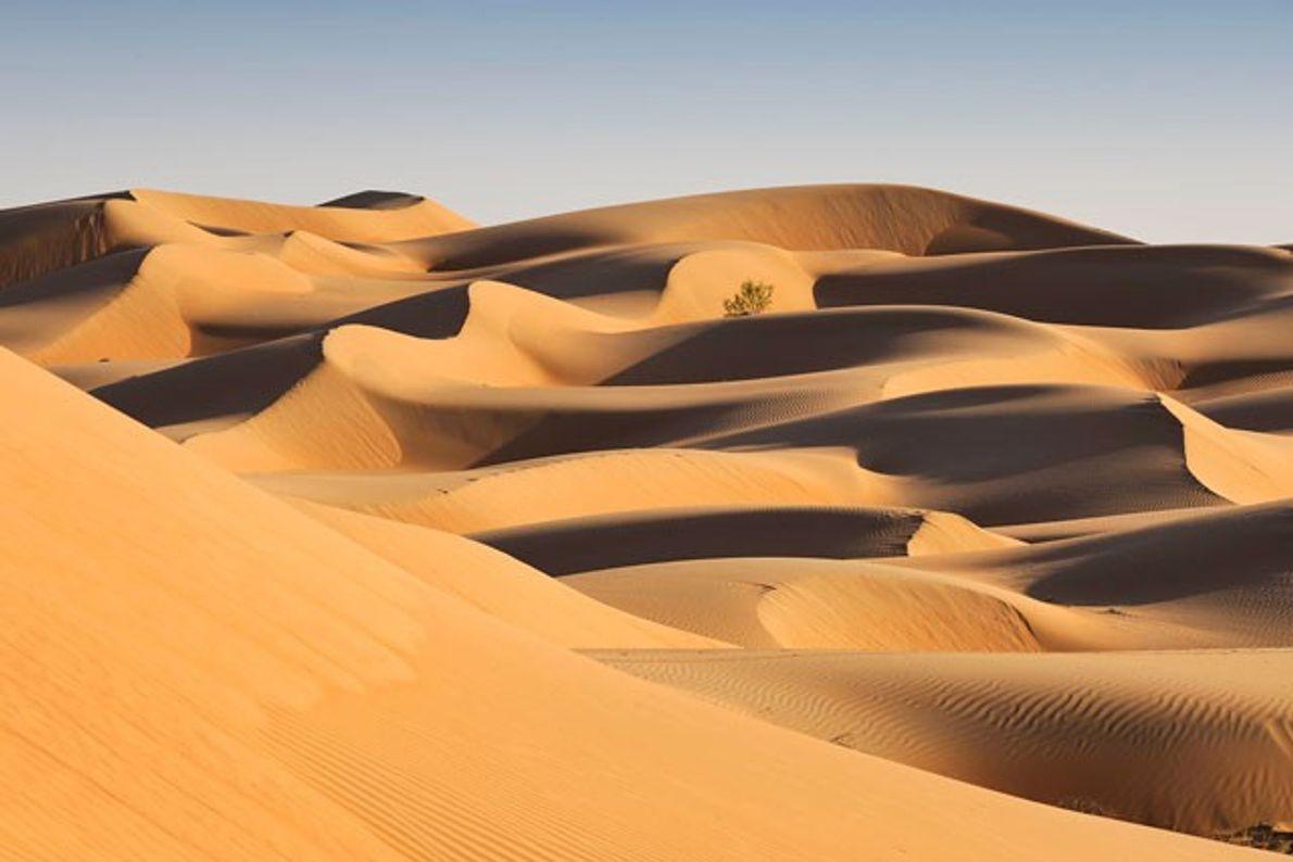 Shariqiya Sands: A desert wilderness