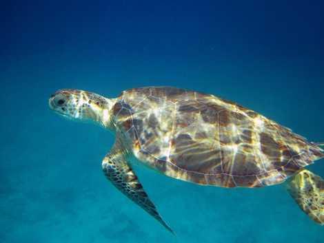 St. John: Turtle Soup