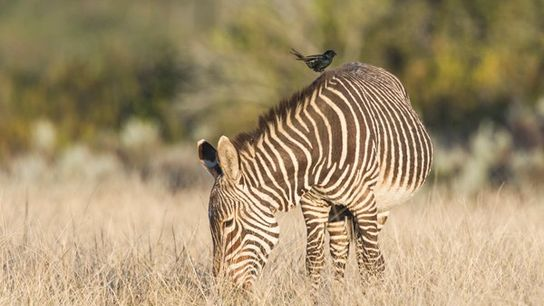 Gondwana Game Reserve.