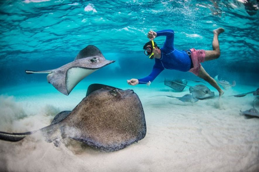 Stingrays, Jamaica