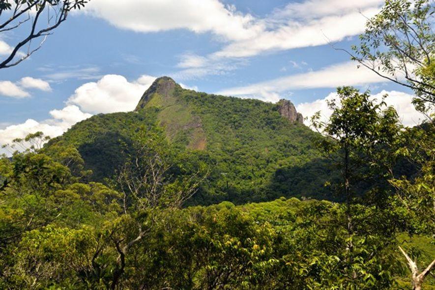 Rio de Janeiro: Return of the rainforest