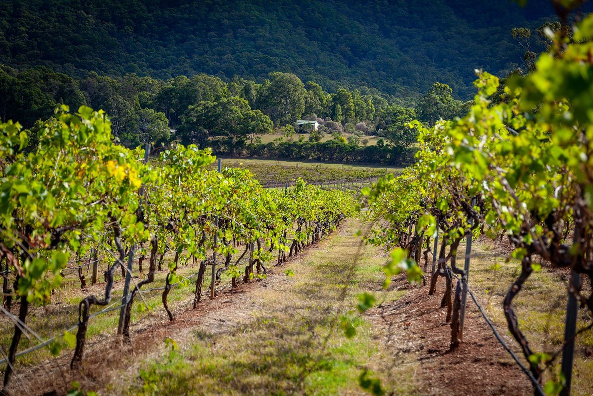 Meet the icon: Hunter Valley