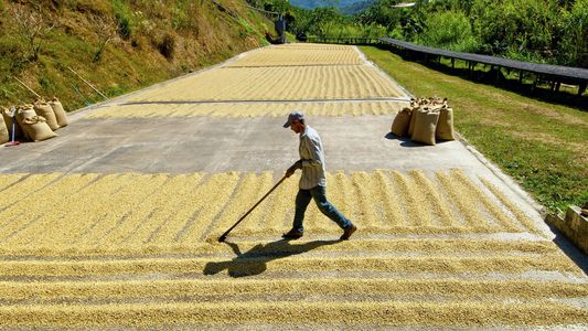 Why Costa Rica is one of the true coffee capitals of the world