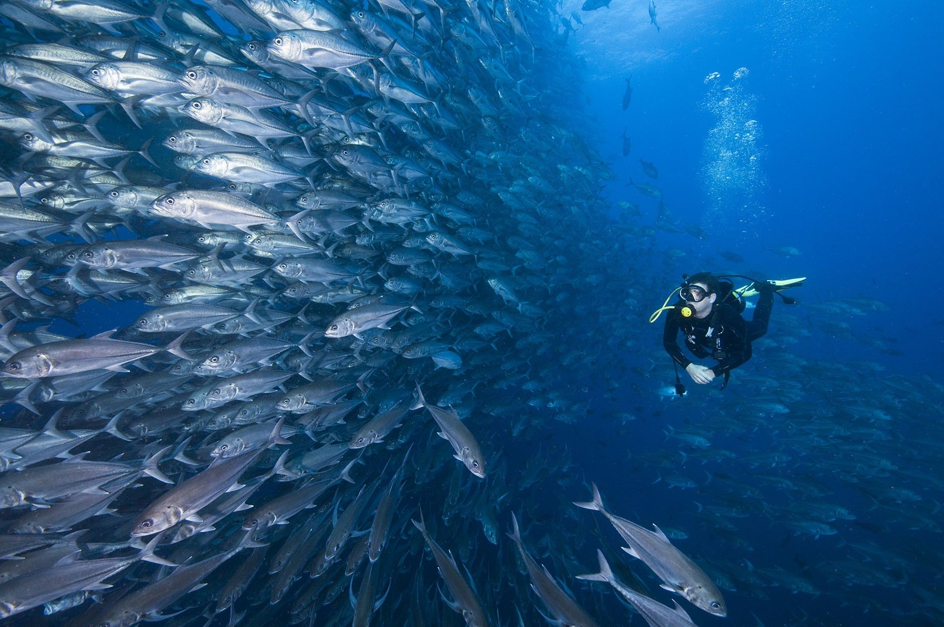 Diving in Costa Rica