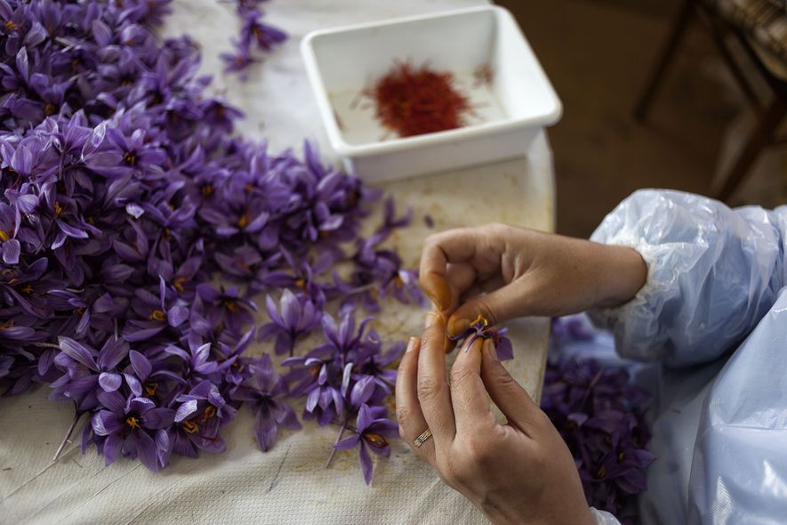 Meet the Maker: saffron in Spain