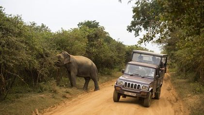 Family travel: Sri Lankan safari
